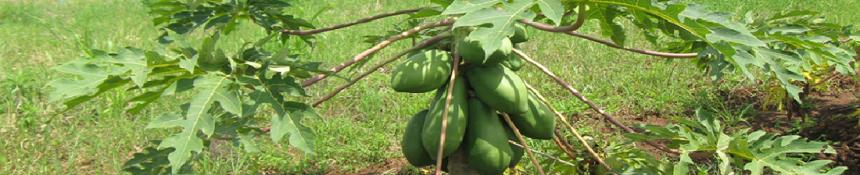 Oromia Agricultural Research Institute